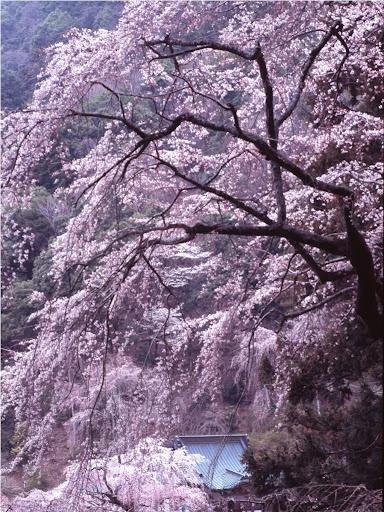 Minobu temple, Japan: photo by Gonta