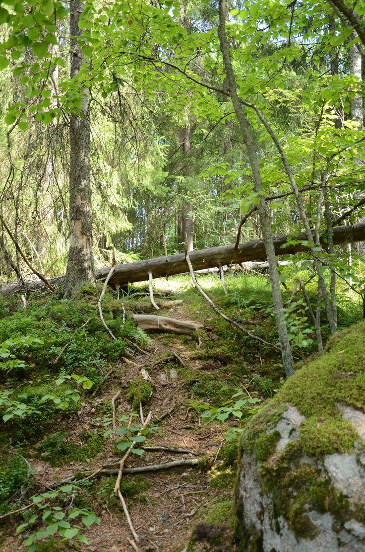 Nuuksio National Park, Finland, Photo: Aura Piha