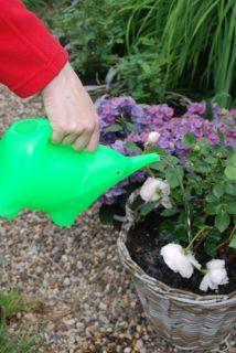 House2Home Garden Koleksiyon - Plastik Sulama Kabı - Mavi Fil