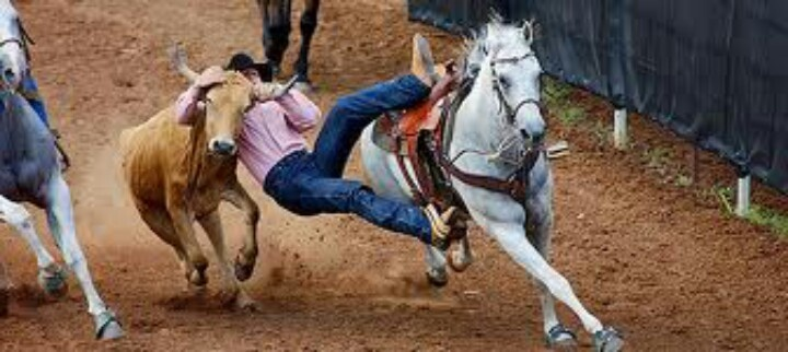 17 Best Images About Steer Wrestling On Pinterest Horns