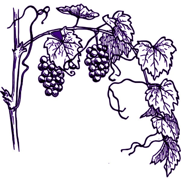 8 best thruough the grape vine images on pinterest grape vines rh pinterest com grape vine clip art images grape vine clipart border