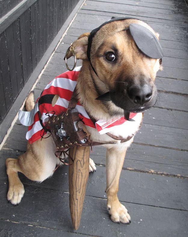 The Best 3 Legged Dog Costume Ever Dog Costumes The O