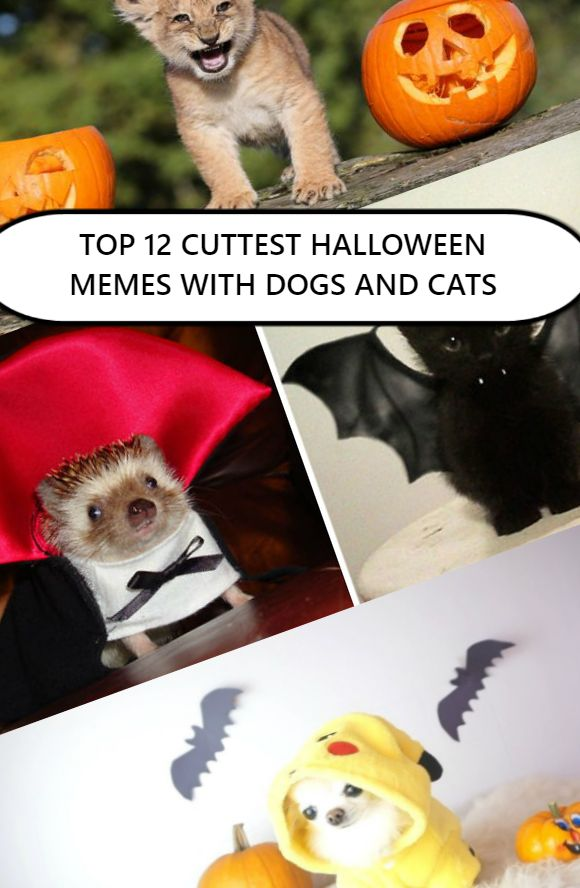 Cute and Happy Halloween Memes , With Dogs and Cats , Spooky