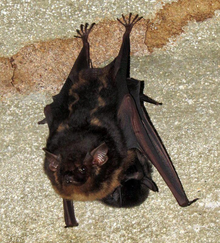 Bats in Soberania National Park, Panama. #Dtour @DoubleTree by Hilton