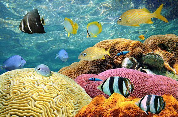 Coral Reef in Bimini, Out Islands, #Bahamas #iGottaTravel ...