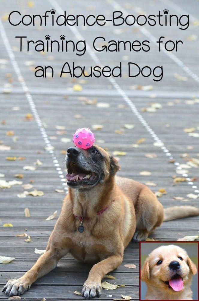 Dog Behavior Urinating Bed And Clicker Dog Training Near Me