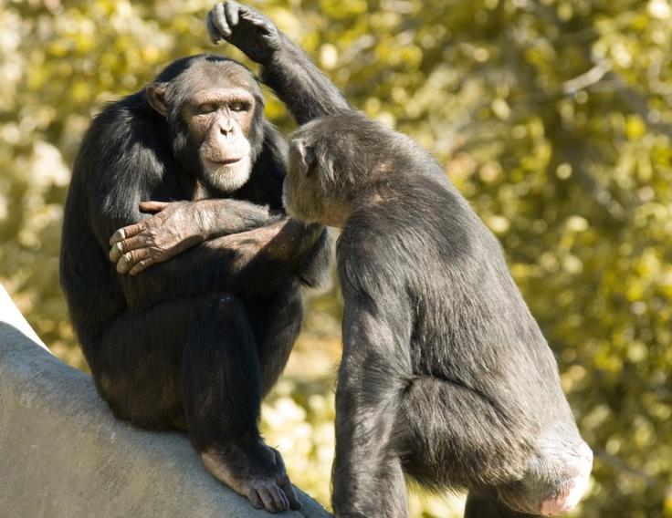 17 Best images about Mammals on Pinterest | Bald eagle ...