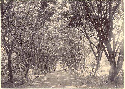 De Hoofdstraat van Makassar, Sulawesi circa 1900.