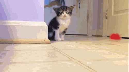 Gatito demasiado tierno