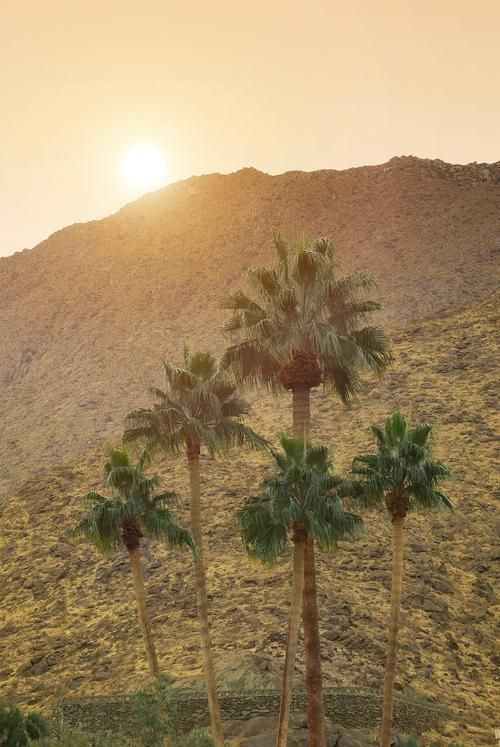 Best Palms For Days Images On Pinterest Cocktails Palms - I do 10 best places in the world to elope