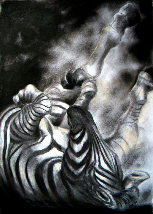 Zebra rolling in the dust, Charcoal on 300gsm paper.  Drawn by Susan Brett.