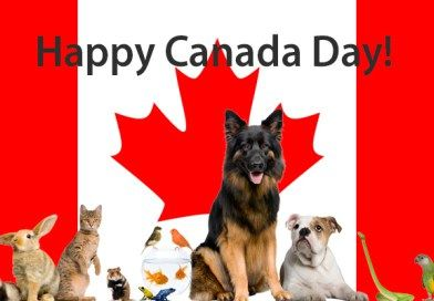 Happy Canada Day…. these cats will make you smile!