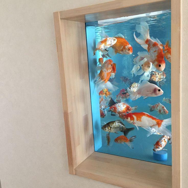 金魚/水槽/壁/天井のインテリア実例 - 2016-07-19 16:53:46 | RoomClip(ルームクリップ)