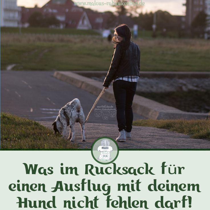 Ausflug Mit Hund Was Im Rucksack Nicht Fehlen Darf Hunde Hund Und Katze Ausflug