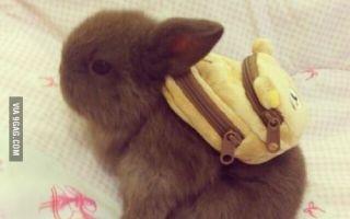 Here's a bunny with a backpack (via oowot.com)