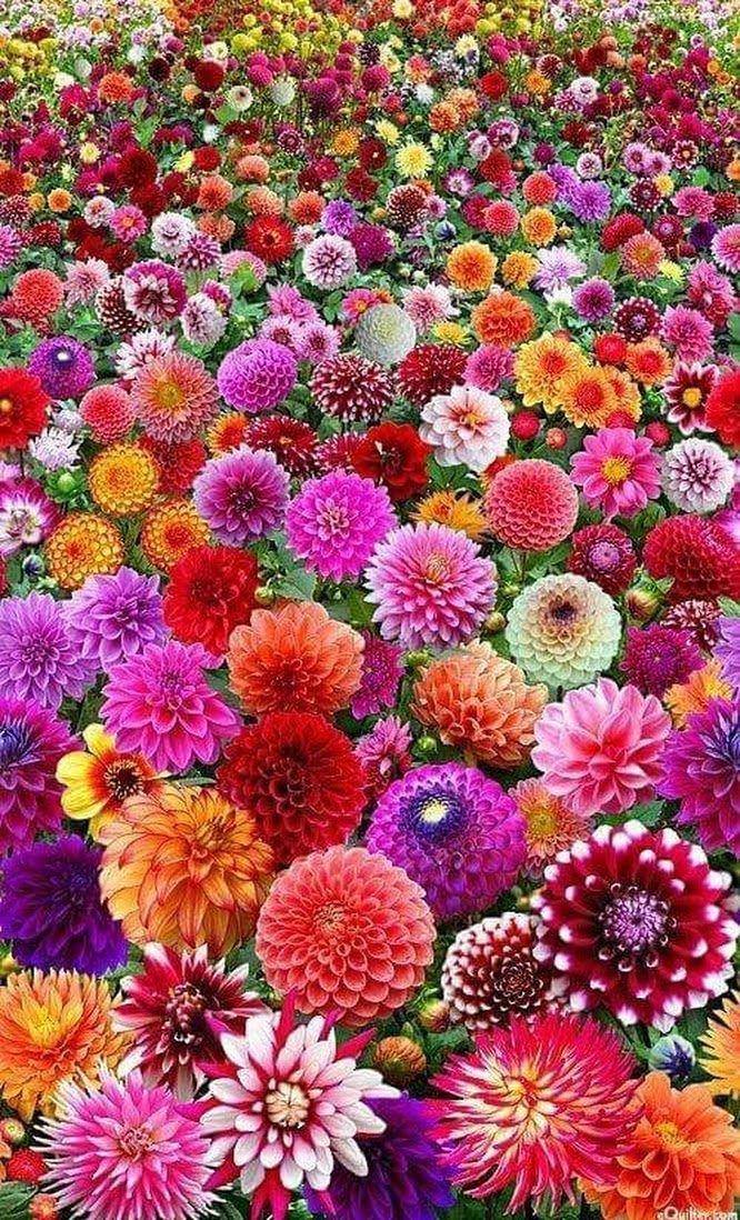 Des fleurs vives comme l'appelle la parure Millefiori ! Venez la décourvrir, c'est par ici : http://france.yvesdelorme.com/p/b/lit-millefiori.html #inspiration #ambiance #nature #fleur #couleur