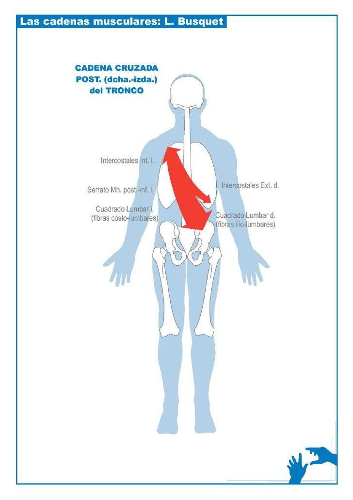 Esquemas cadenas musculares