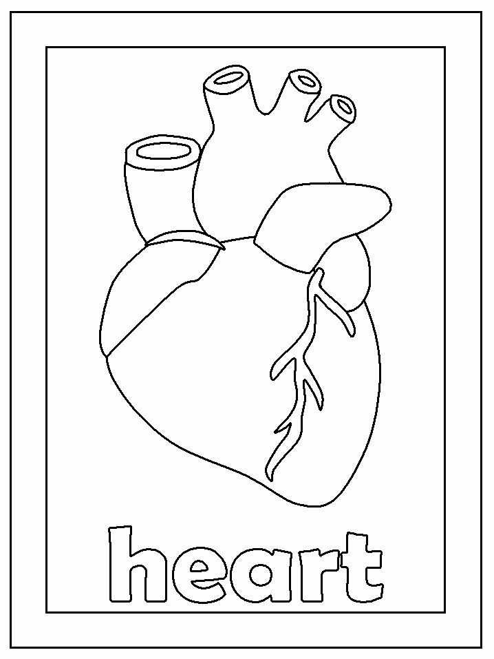 Coloring Pages Of A Heart Beautiful Fun Coloring Pages Human Body Coloring Pages Anatomy Coloring Book Heart Coloring Pages Cool Coloring Pages