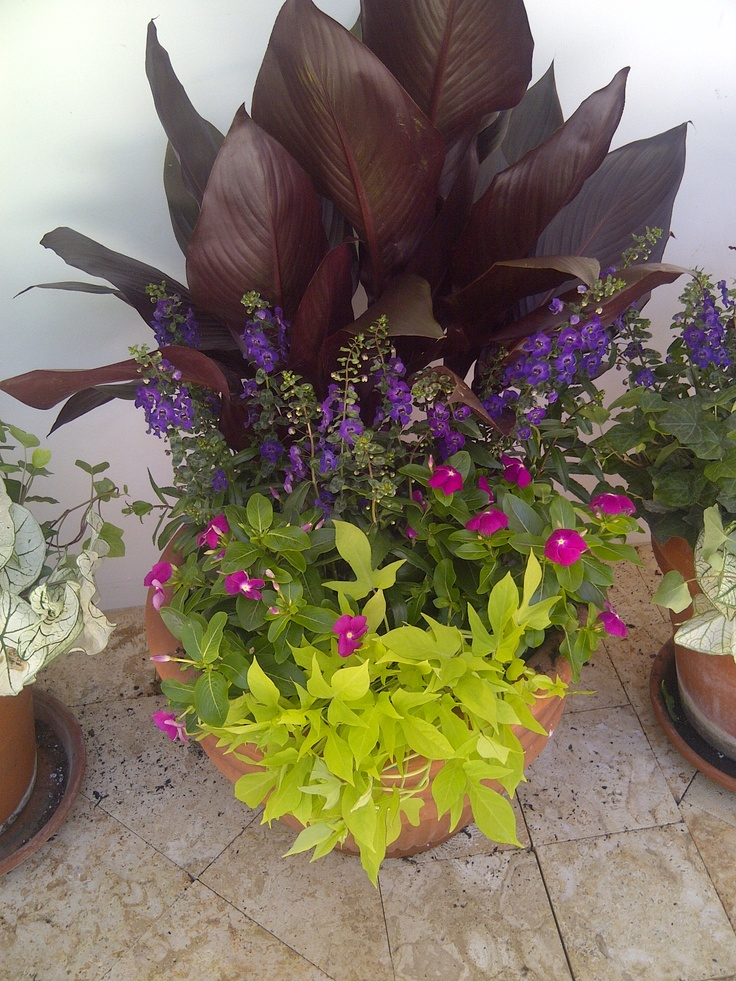 Summer Mix Of Canna Lily Sweet Potato Vine Angelonia