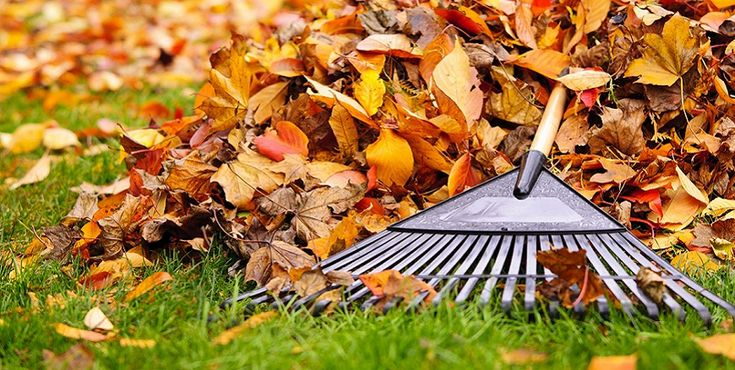 6 maneiras de usar as folhas do outono na sua horta