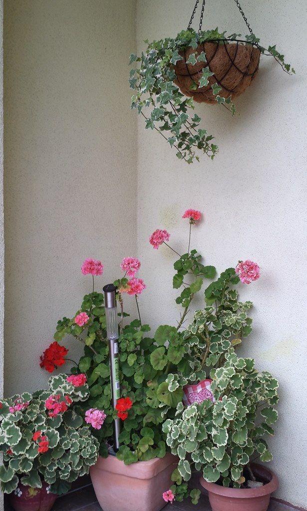 Plante cu flori pe terasa
