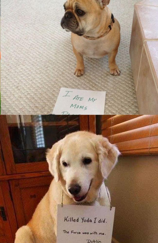 Top 30 Bad Dog Memes Bad Dog Dogs Dog Memes