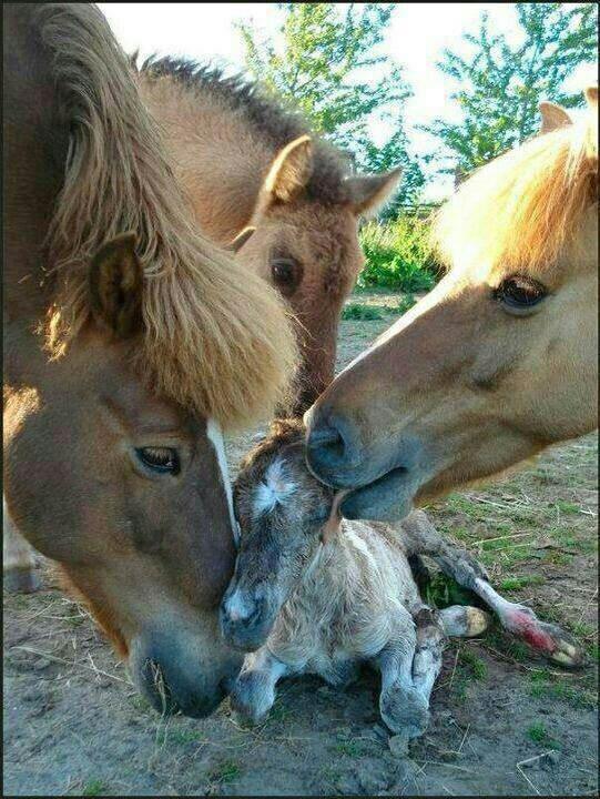 welcoming the newborn. so adorable!