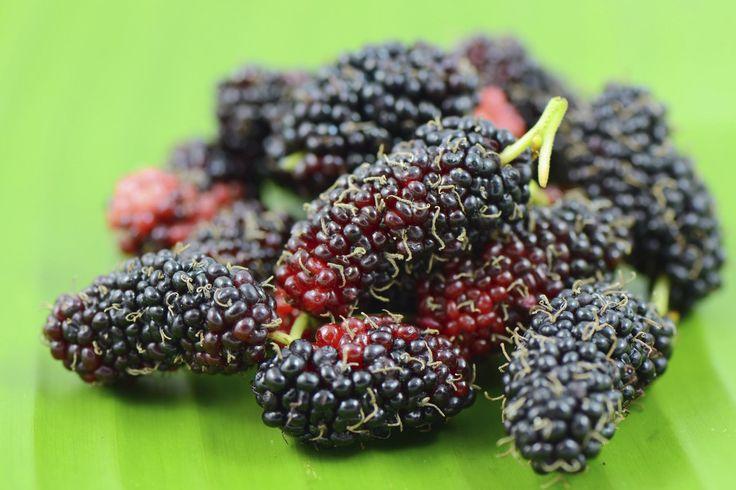 Le more di gelso, piccoli frutti dai grandi benefici.  Le more di gelso sono antitumorali, antiossidanti, ma inoltre, quello che non ci aspettavamo di sapere è che sono anche...[Leggi di più...]