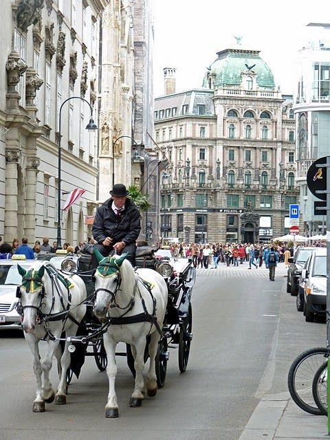 #Vienna #Austria , those horses are usually the mares that are breed to the dancing white horses