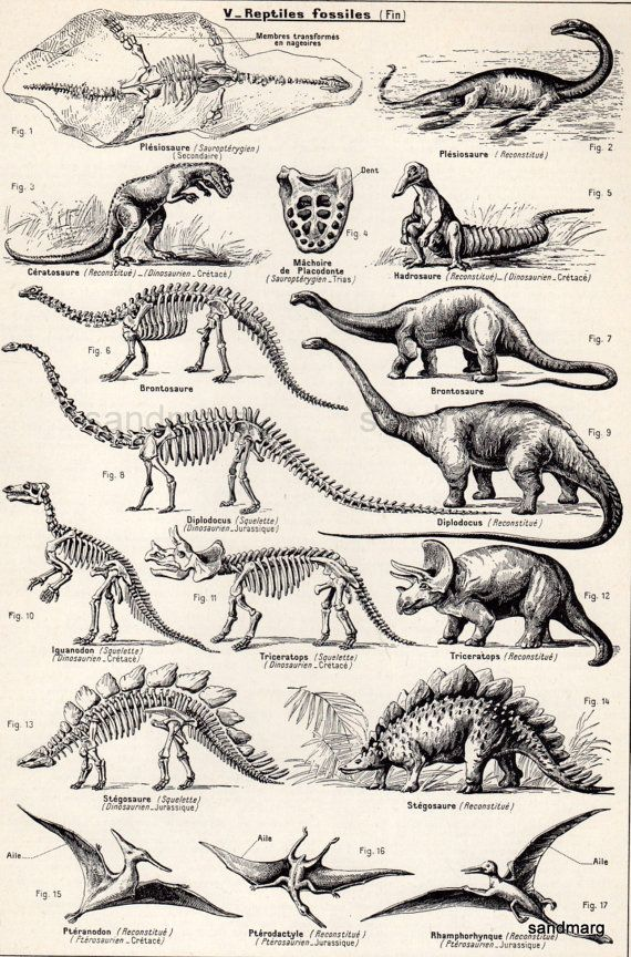 Vintage French Chart Dinosaurs Zoology Black and White by sandmarg