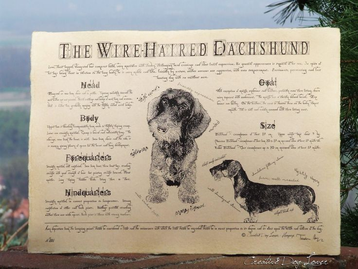 Antique styled dog standard - Dachshund wire-haired by Creativedoglover on Etsy