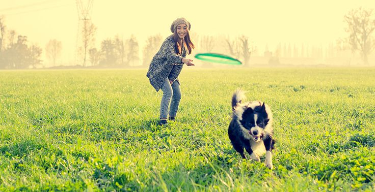Dogs are like children, they need to do something with their energy. Spending quality time together assists in building a good relationship with your dog. Read More