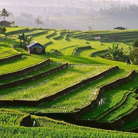 Jatiluwih, Bali, Indonesia