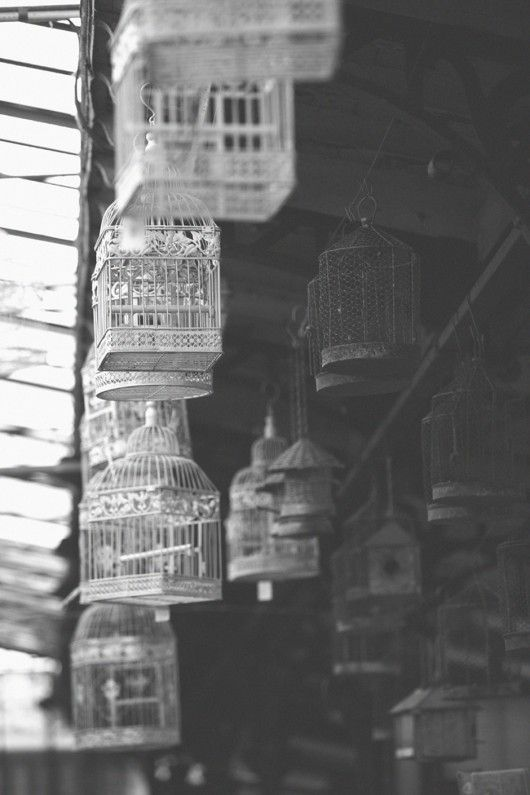 bougeoir cage à oiseau: Birds Cadg, Birds Cages, Bougeoir Cages, Fowl, Inspiration Boards, Bird Cages, Tweets Birds, Birdcages Xxx, B W Birds
