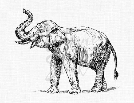Line Art Drawing Elephant Png Jpeg Images Etsy Elephant Sketch Indian Elephant Drawing Elephant Drawing