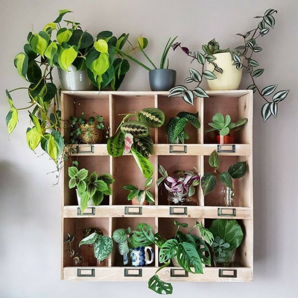 Top 5 Pflanzen zum Bauen Ihres eigenen grünen Regals // @arapisarda