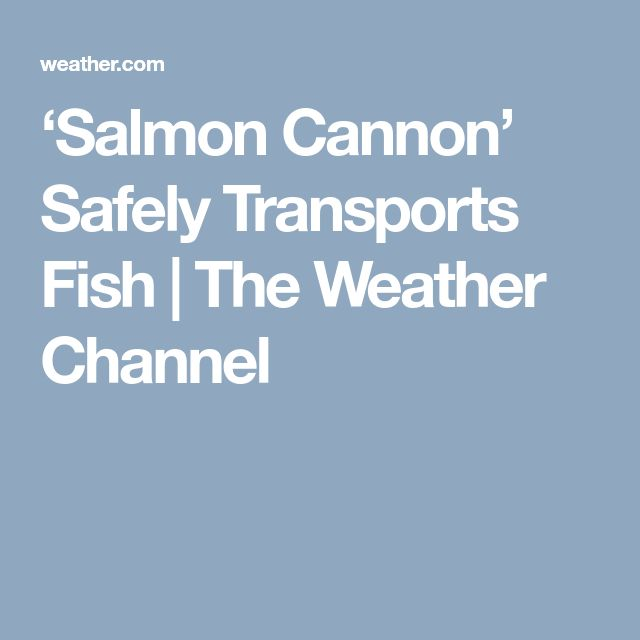 'Salmon Cannon' Safely Transports Fish | The Weather Channel