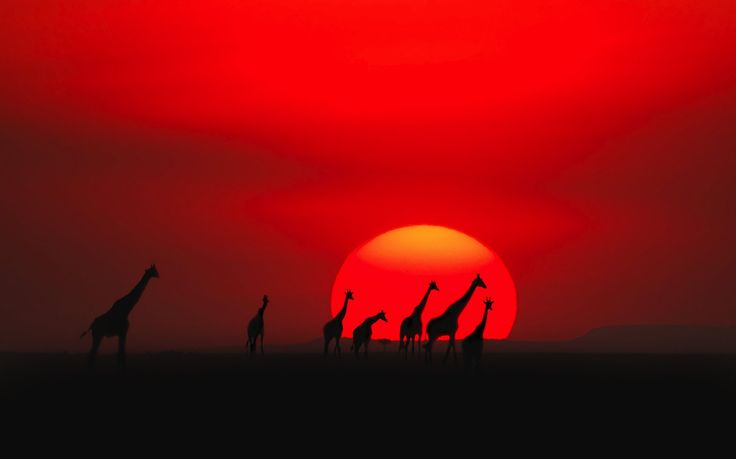 Maasai Mara, Kenya - The 16 Best Places In The World To Watch The Sunset! in - Travel - Hand Luggage Only