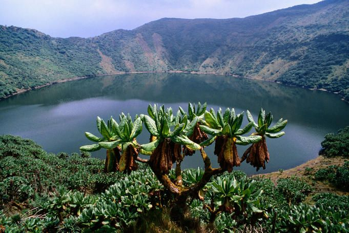 Rwanda! #1 on my list of places to visit- for so many reasons, academic and otherwise. I bet it's just a beautiful country.