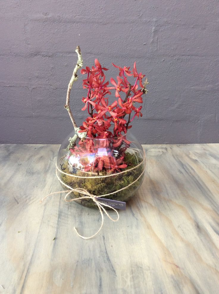 Sculptural Arrangement with rich red orchids in a fish bowl for a corporate breakfast.