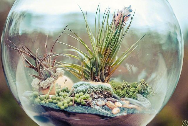 Whether you're looking for a fun project to do with the kids or an easy gift for a friend, a DIY terrarium is your answer! Learn how to make one on Craftsy!