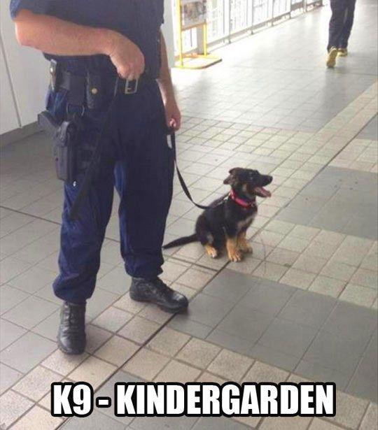 K9, kindergarten…