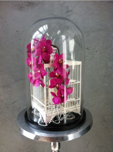 Bird cage in Glass Dome with Orchids
