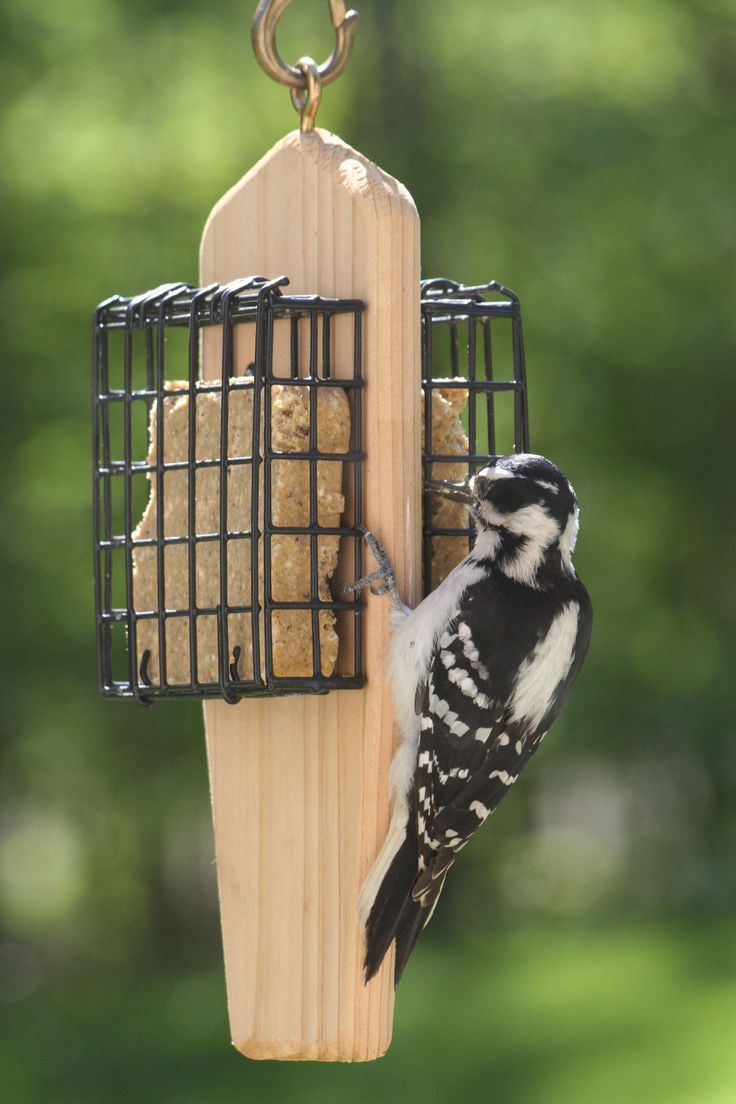 How to hang suet feeder wiring diagrams wiring diagram for How to make a cool bird feeder