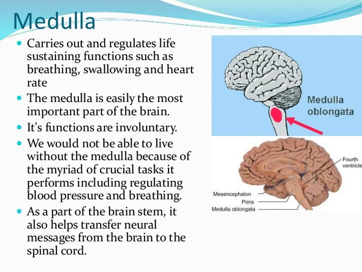 Mudulla: Regulates unconscious functions such as breathing and circulation. Controls life-sustaining functions (heartbeat, breathing, swallowing, digestion, coughing, vomiting). Located at the top of the spinal column, base of the head/skull.