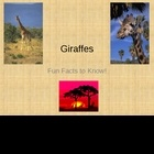 Giraffes - Fun Facts PowerPoint. Learn about giraffes! This giraffe powerpoint has 10 slides of fun facts about the life of a giraffe. Can be used ...