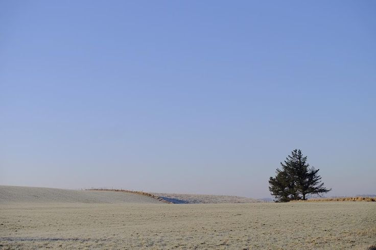 #icecold  #morning witha #lonely #tree on the #fields . Love these #blue #clear days .