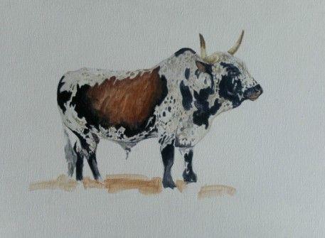 Nguni Bull, Acrylic on canvas by Murray Ralfe