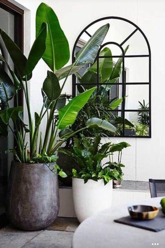 10 ausgezeichnete Ideen, um Zimmerpflanzen im Innenbereich anzuzeigen