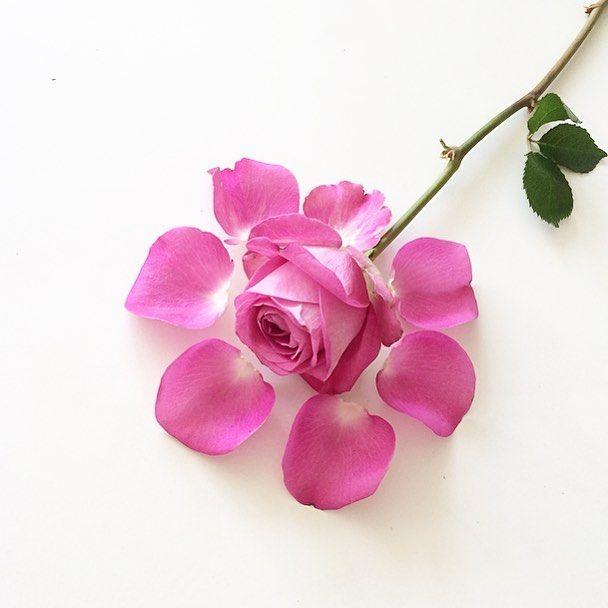 Rosorna jag fick förra veckan är fortfarande lika vackra! Still beautiful after a week! #ros#rosor#rose#roses#inspiedbypetals #natur#flowermagic #naturart #flowerart #natureflatlays #blomma #blommorgörmigglad #blommor #rosa #pink #flowerlove #myeverydaymagic #petals #flowers #